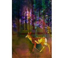 Back to the Forest Photographic Print