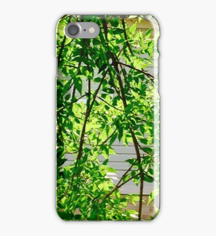 Leaves and bark iPhone Case/Skin
