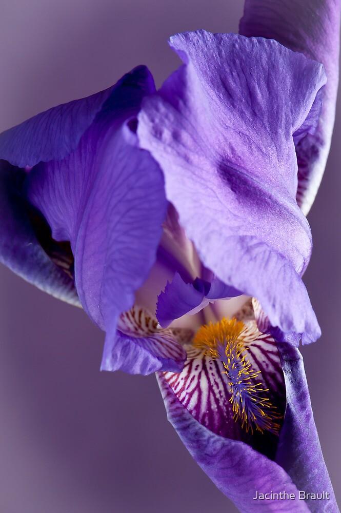 Purple Iris 3 by Jacinthe Brault