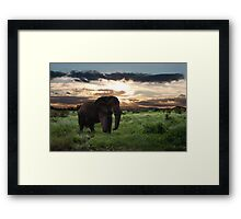 KENYA - Amboseli Game Reserve Framed Print
