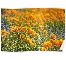 Orange Flower Bed Poster