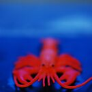 Toy Lobster by Danielle  La Valle