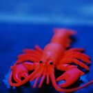 Toy Lobster 2 by Danielle  La Valle