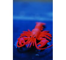 Toy Lobster 2 Photographic Print