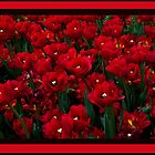 Field Of Red Tulips by elainemarie999