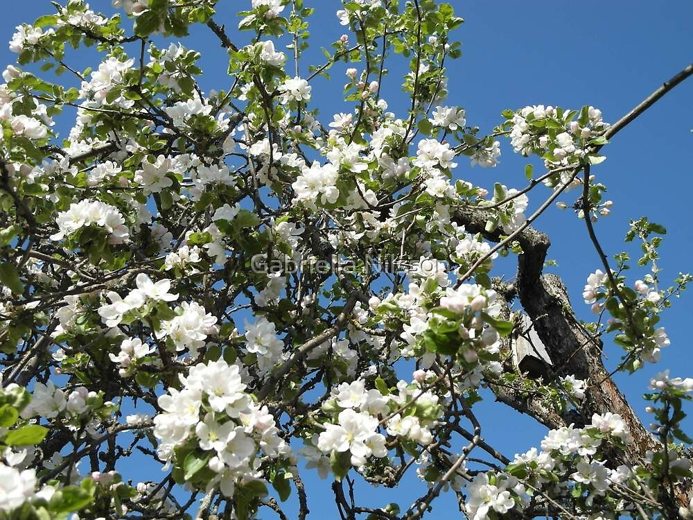 """White Blossom"" by Gabriella Nilsson"
