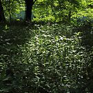 Woodland Sunlight 01 by Artberry