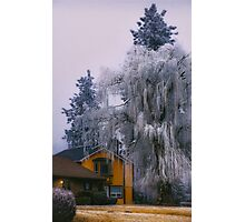 Frozen Willow Photographic Print