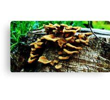 Stump N Fungus Canvas Print