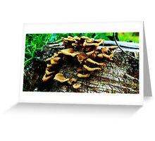 Stump N Fungus Greeting Card