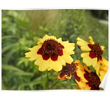 pretty red And yellolw flowers Poster