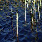 River blue by Bluesrose
