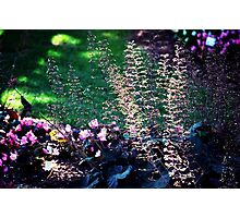 morning in the garden Photographic Print