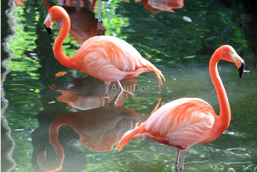 American Flamingoes by AuntDot