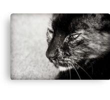 Feline Canvas Print