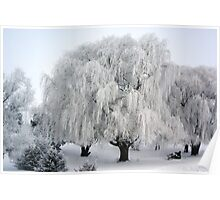 Winter's Frosted Willow  Poster