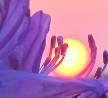 Red Sun at Sunset, Cradled by a Flower by Honor Kyne