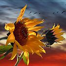 hot summer wind by carol brandt