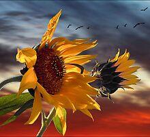 hot summer wind by carol brandt