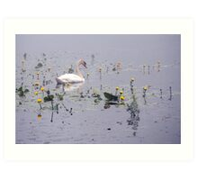 Swan and Lily Ponds Art Print