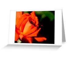 Red Flower Dark Background Greeting Card