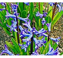 Bell Flowers Photographic Print
