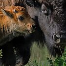 Bison Calf and Mom by Mully410