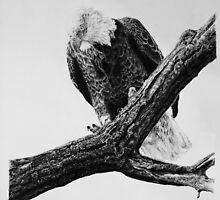 Eagle - Black & White by NISeven