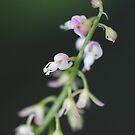 Little Flowers by randomness
