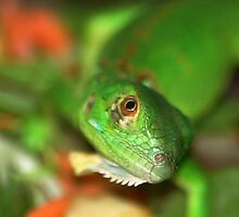 Green Gecko by loiteke