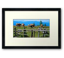 Austrian Cows Framed Print