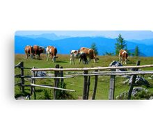 Austrian Cows Canvas Print