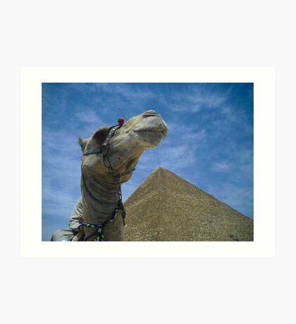 Camel Shot Art Print