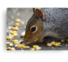 Collecting Food Canvas Print