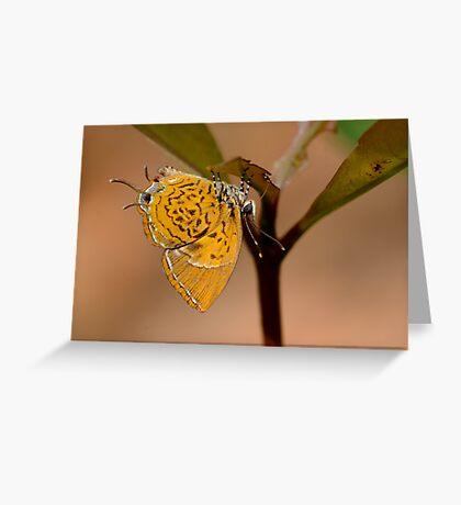 Monkey Puzzle Greeting Card
