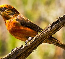 crossbill cabin lake Oregon by kevin  caldwell