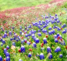 Dreamy Spring Field by Carolyn  Fletcher