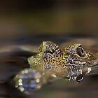 Freshwater croc by bluetaipan