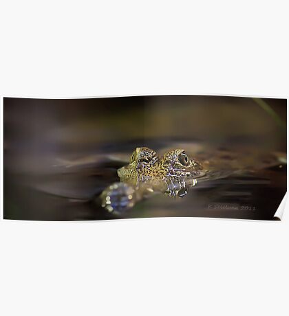 Freshwater croc Poster