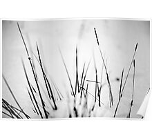Grasses in the Snow, Southern Upland Way, Scottish Borders Poster