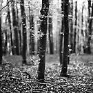 Bokeh, Lindinny Woods, Yair, Scottish Borders  by Iain MacLean