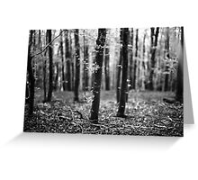 Bokeh, Lindinny Woods, Yair, Scottish Borders  Greeting Card