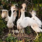 Little Blue Heron Quartet by Bonnie T.  Barry
