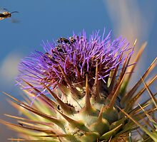 Busy Bees by Patrick Anastasi