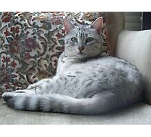 Neffi.....Egyptian Mau Photographic Print