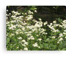 daisy like flowers Canvas Print