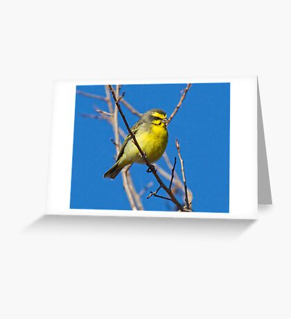 Yellow Fronted Canary Greeting Card