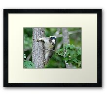 In Your Face Southern Silver Fox Squirrel Framed Print