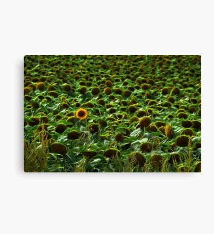 Stand Tall & Shine Canvas Print