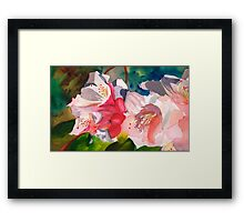 Rhoddies in Bloom Framed Print